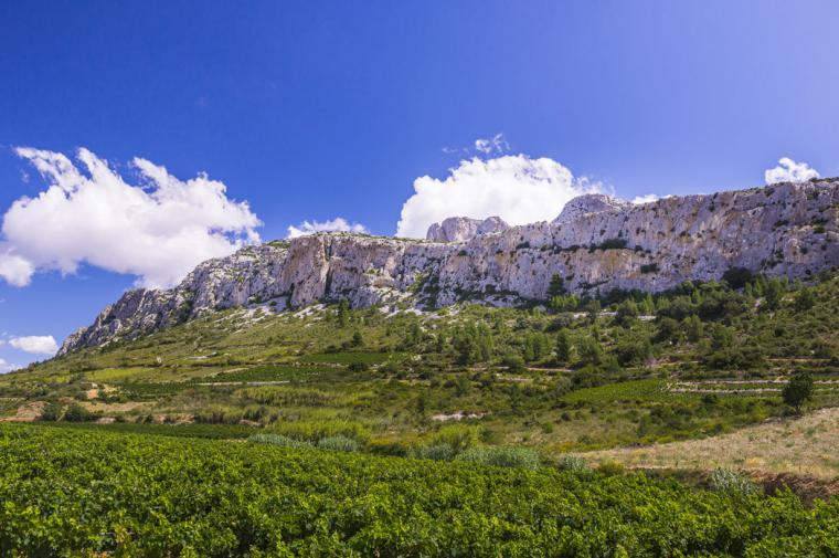 Le vignoble de Vingrau - crédit Lionel Moogin - Agly Tourisme